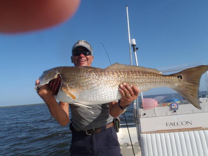 Redfish shock treatment saltwater reports for Ct saltwater fishing report