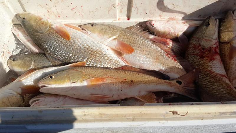 Slow times saltwater reports for Is tomorrow a good fishing day